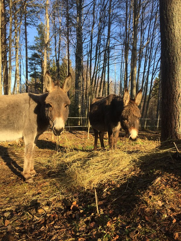 If you like say hello to our donkeys!