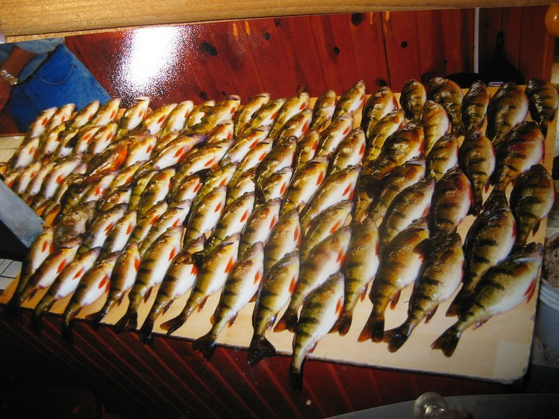 Excellent jumbo perch fishing.  Guided ice fishing trips available.