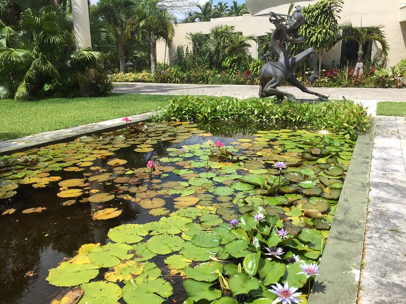 day and night bloom water lily pond