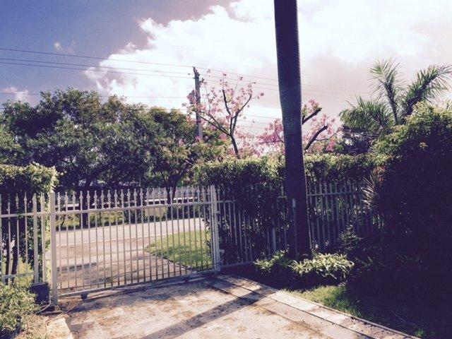 florescendo fora do portão