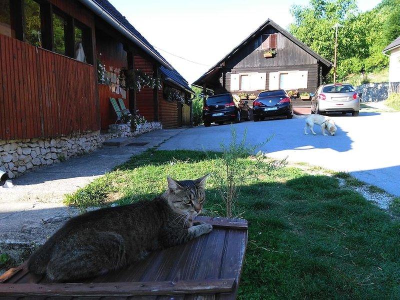 Notre chat Vinko et Dila - prendre soin de vos voitures;)