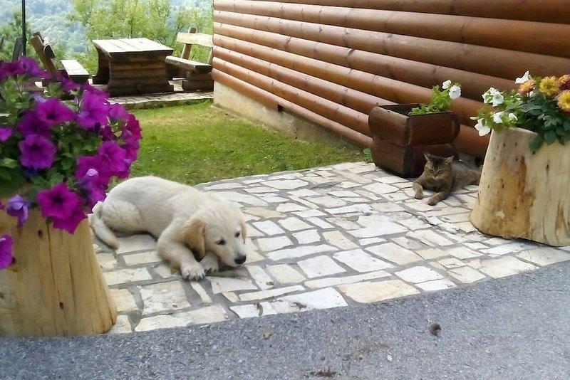 Ils n `t mignon? Dila et Vinko quand ils étaient petits.