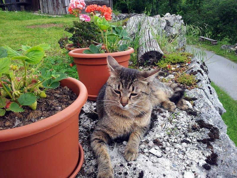 Cat Vinko aime la vie privée, donc probablement vous ne serez pas le voir souvent.