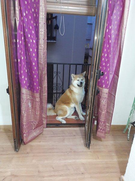 Balcón del salón y mi perro suki