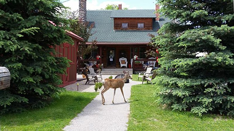 Historic PRIVATE 5 Bedroom Cabin-Walking Distance to Downtown Cody, WY Dining, Ferienwohnung in Ralston