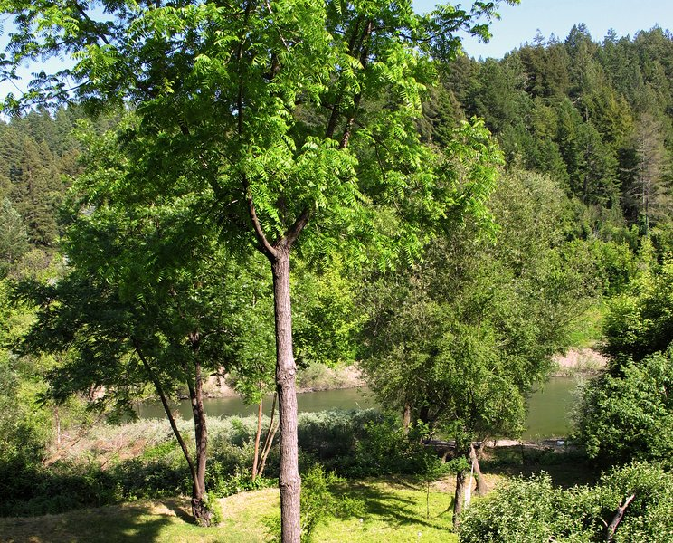 Spring View of River from Deck