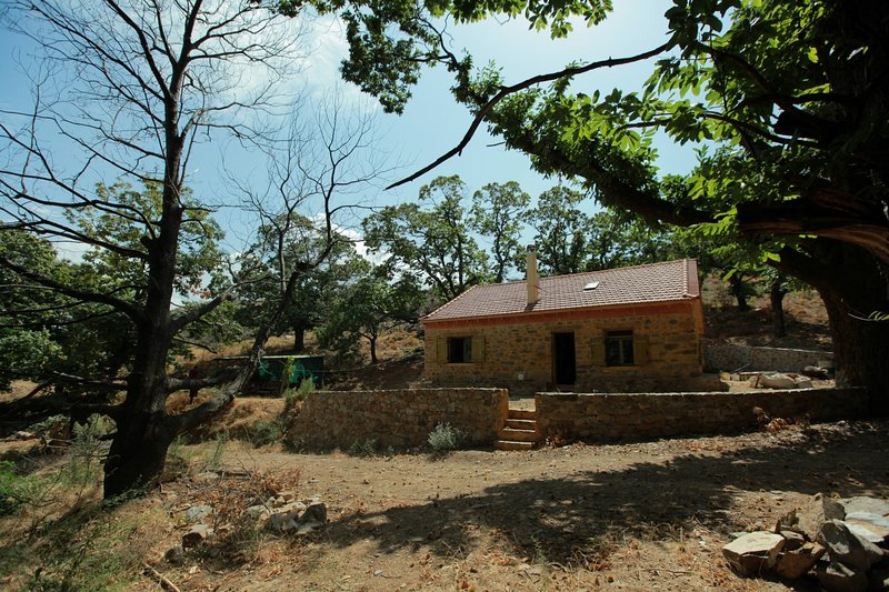 Eco-built house in the heart of the wood