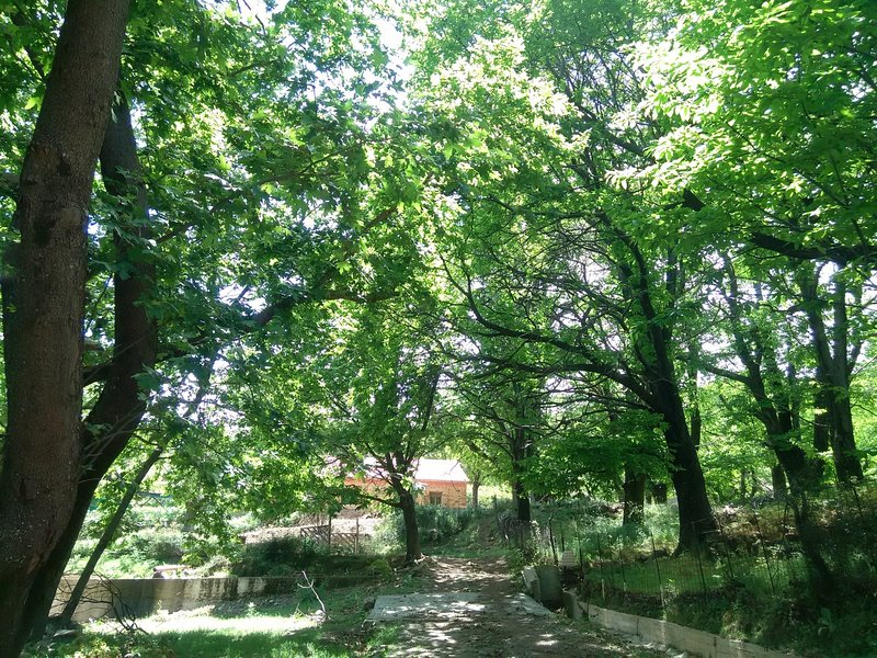 Chestnut trees surround the house