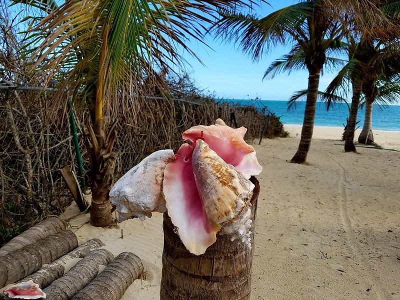 Conch (ausgesprochen KONK) Nationalgericht von Bahamas