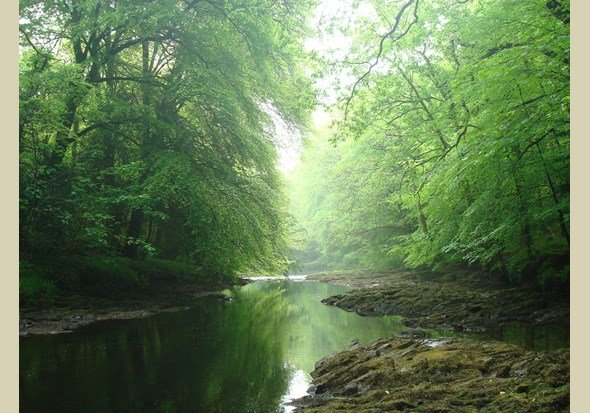 Stunning Hembury Woods is minutes walk away. Many beautiful swimming spots await you!