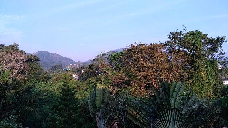 vistas panorámicas de la selva tropical detrás de la villa