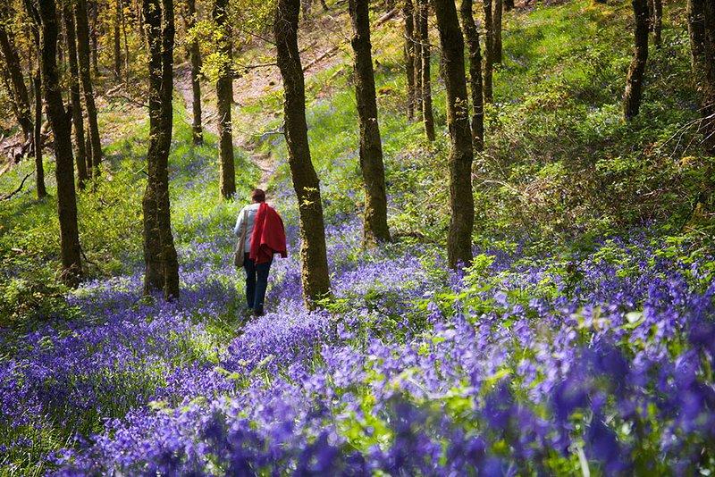 Spring in Snowdonia ...