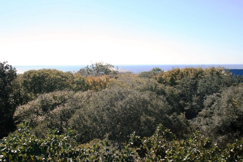 Gulf View Over the Oak Canopy