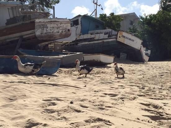 playa local del pescador
