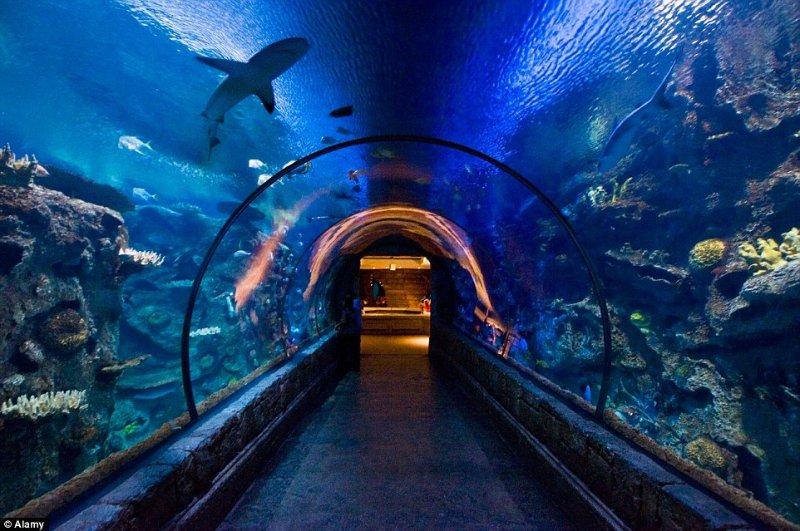 The SEA LIFE London Aquarium