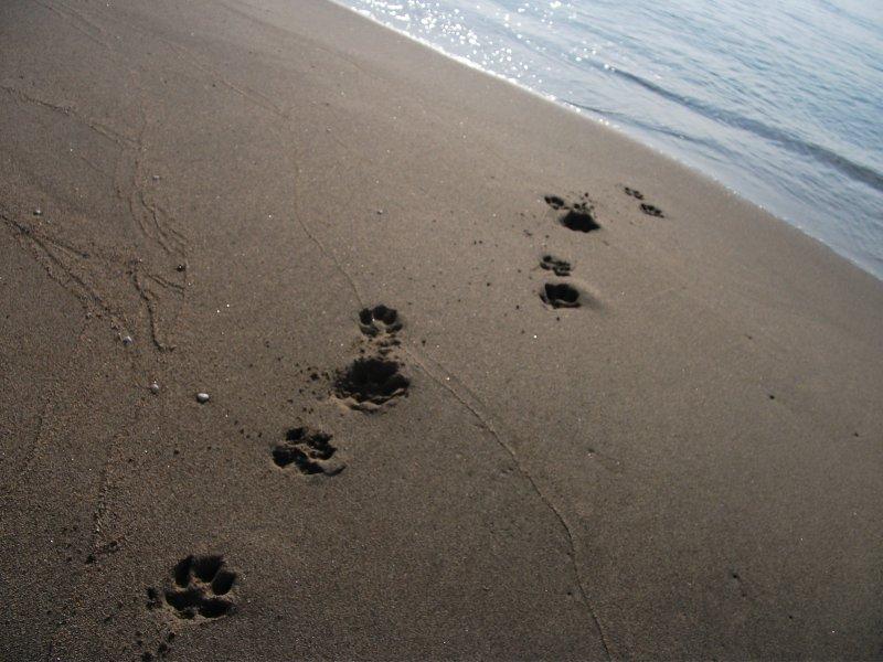 pattitales footprints on the sandy beach