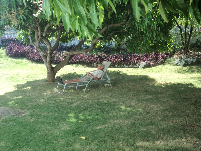 Relax under the mango tree