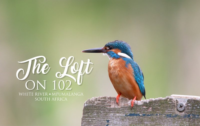 The Loft on 102, vacation rental in White River