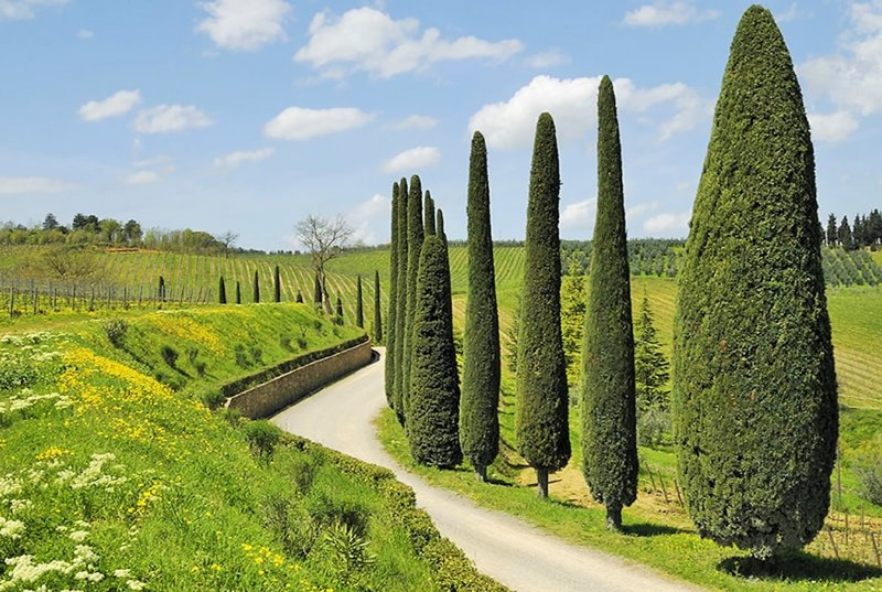 The Siena countryside is just spectacular