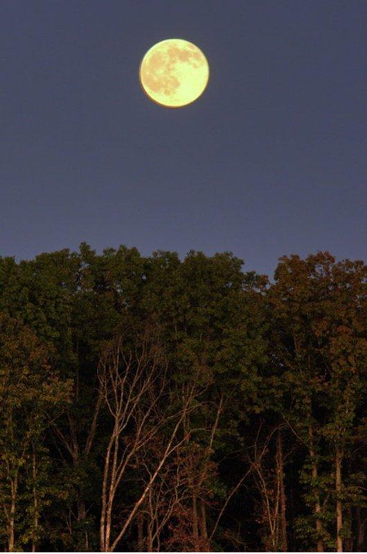 La luna llena brilla sobre el bosque, vista desde el porche.