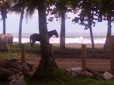 Experience of a life time on the beach in beautiful Costa Rica!