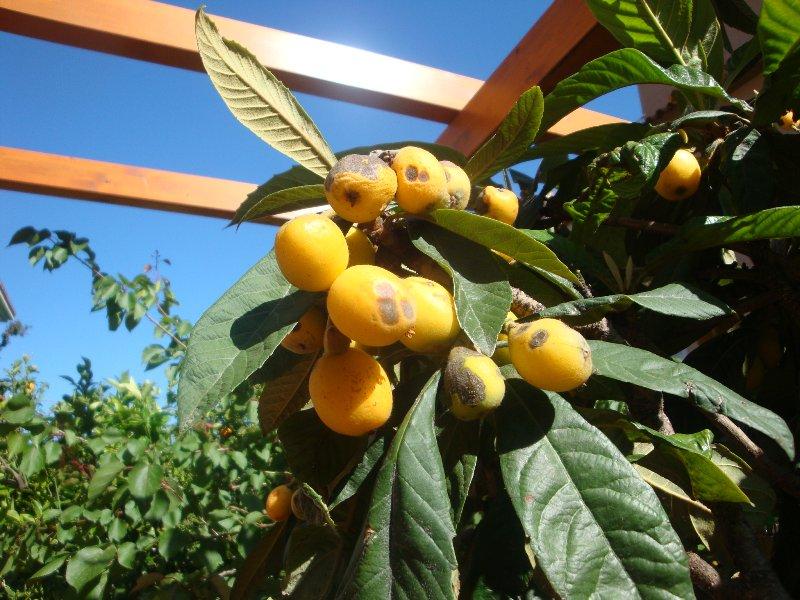 Fruit trees in the garden