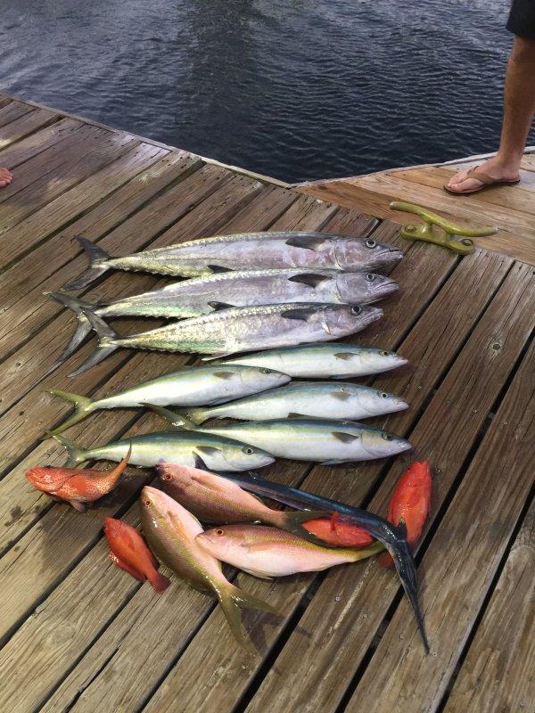 """Färsk fisk är ofta tillgängliga steg bort på vår marina från """"Double Header"""" fisketurer."""
