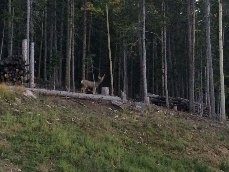 Buck en el lado de la casa.