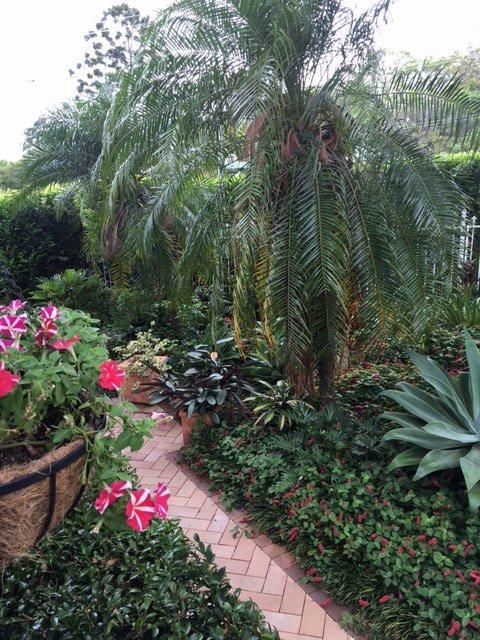 Lummiga tropiska trädgårdar