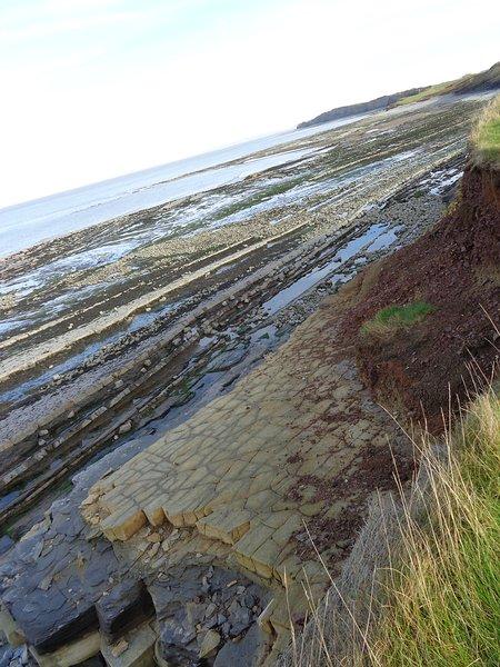 Kilve plage chasse aux fossiles