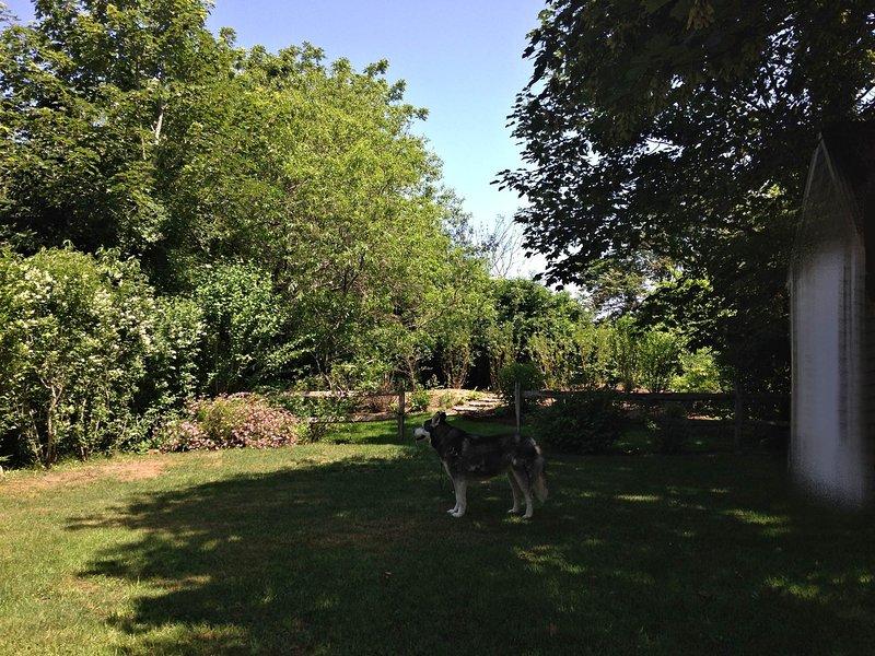 Backyard with Koda