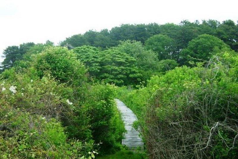 Agradável passeio pela natureza atrás da nossa casa no caminho para o cais.