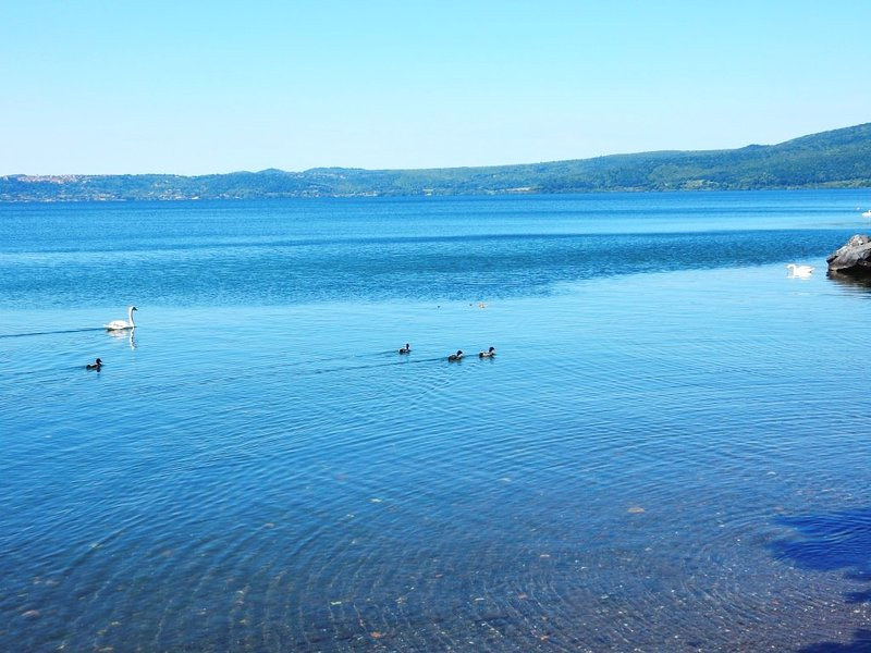 Cisne deslizándose en el lago