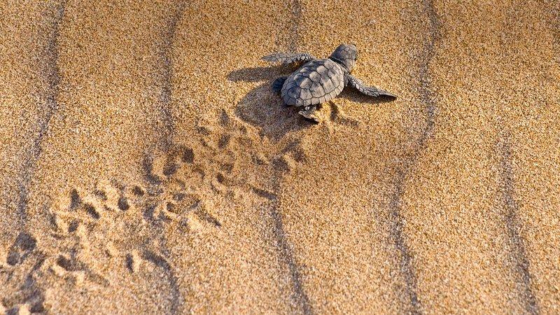 Visite de la tortue