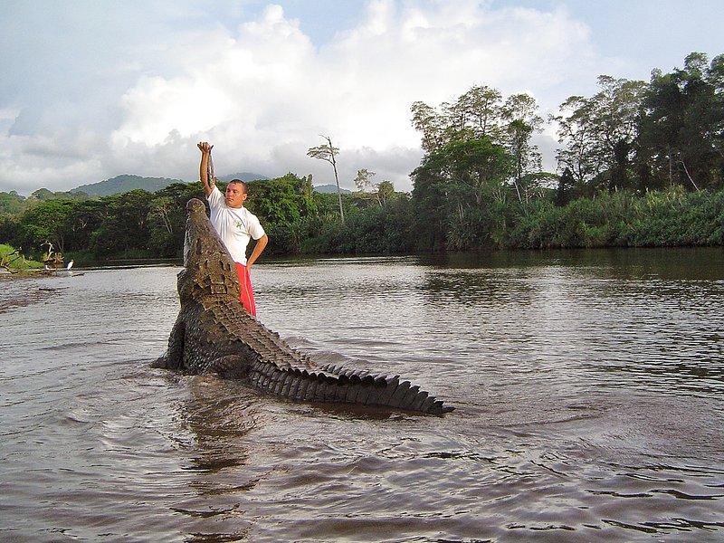 Crocodile tour - dans la rivière Tarcoles
