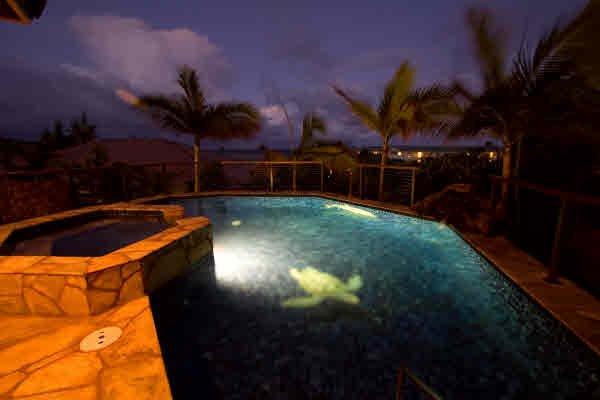 Nager avec des tortues et des dauphins dans la nuit