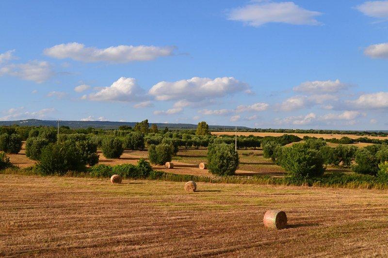 Masseria Triglie - Arabesco, vacation rental in Massafra