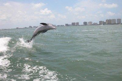 Dolphin suivra le canot et se rapprocher de la station d'accueil