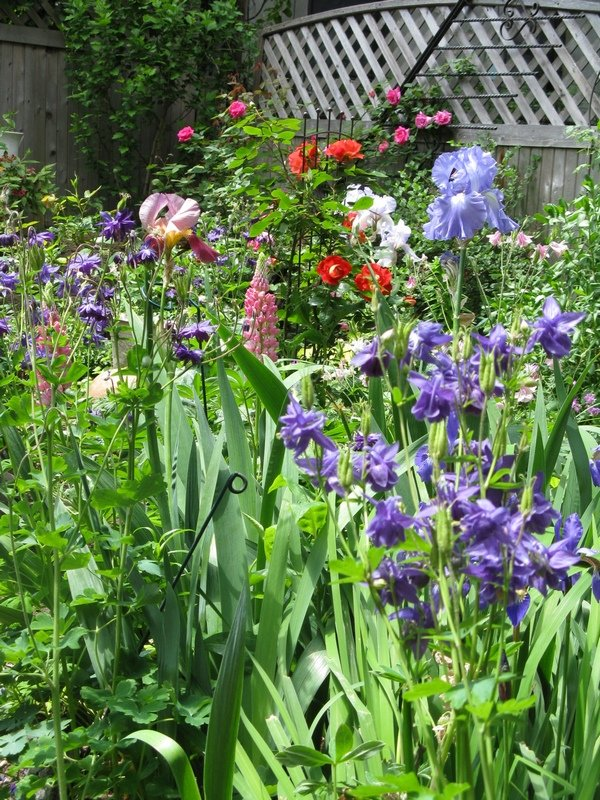 Relax in the beautiful garden in spring-summer!