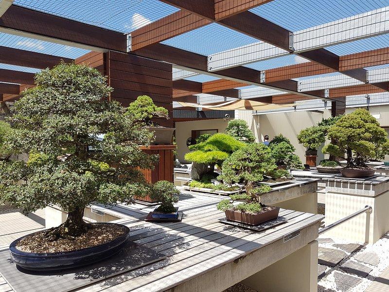 National bonsai collection