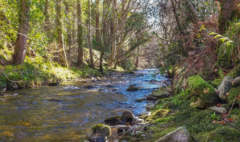 Affleck Lodge sits in a sunny spot, backed by tall trees, on the banks of Moniack burn.