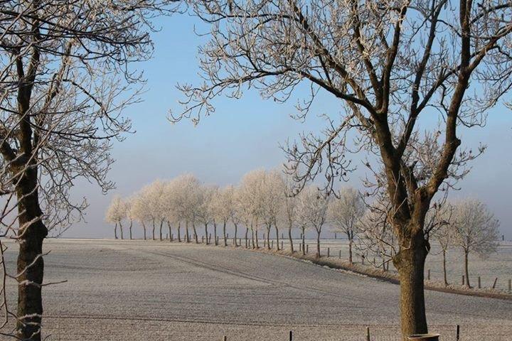Winter frost in Boffles