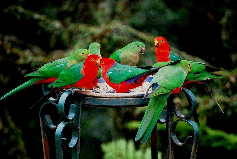 An abundance of native birdlife