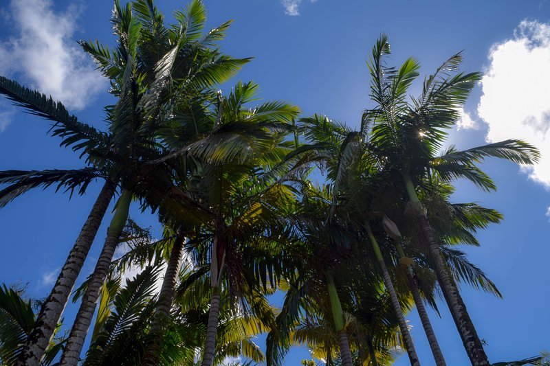Many varieties of palm trees are planted all around the property.