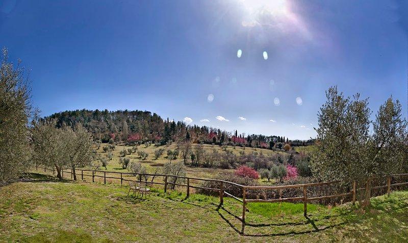 Agriturismo Cavarciano - Vue panoramique