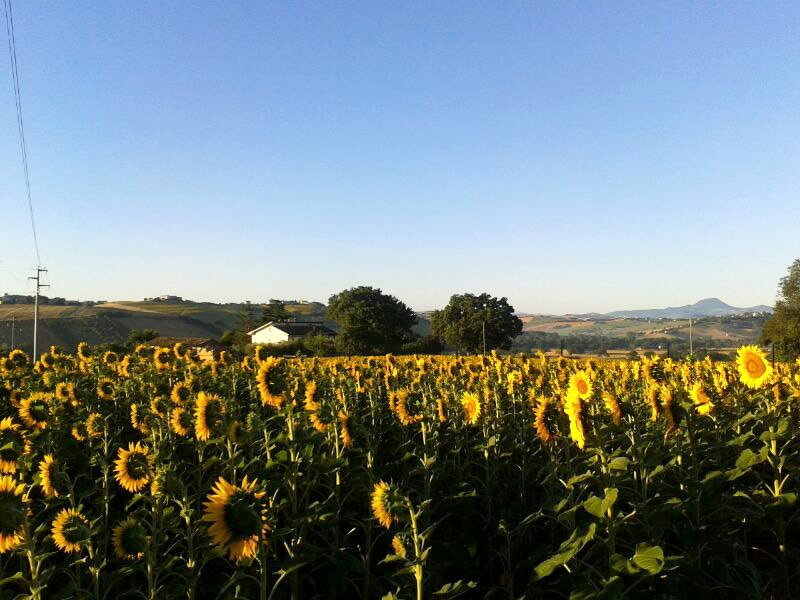 House in the Country Ostra / Senigallia, holiday rental in Province of Ancona