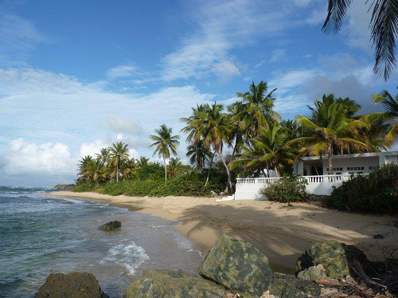 Los Cocos de la playa