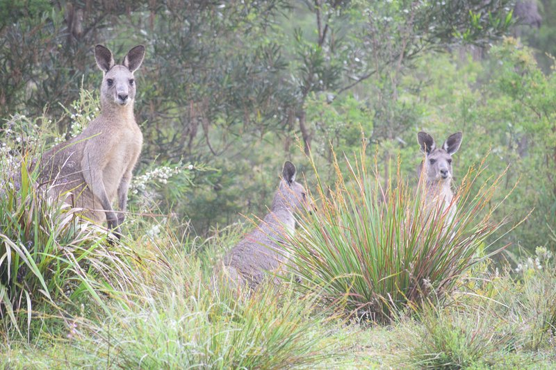 alguns visitantes