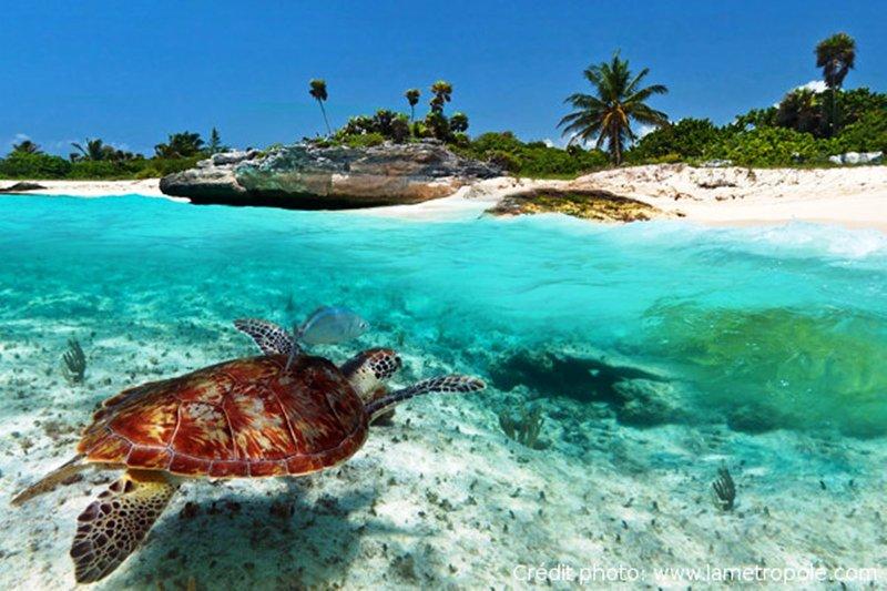 las aguas cristalinas de la Riviera Maya