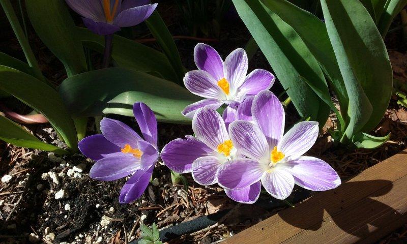 Spring at Sterling Creek Chalet